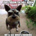 funny_dog_memes22.jpg
